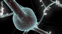 Avrupa'nın İnsan Beyni Projesi